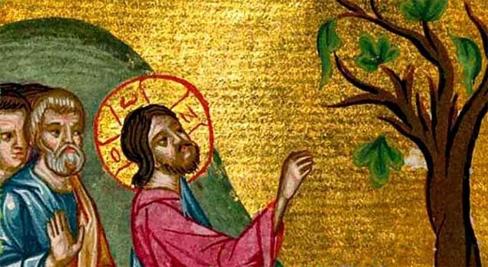 ლეღვის ხის შერისხვა