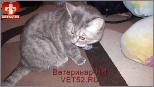 VETERINARNAY-KLINIKA-VETERINAR-NIZNII-NOVGOROD-VET52RU-1.jpg