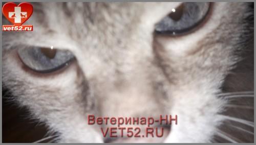 VETERINARNAY-KLINIKA-VETERINAR-NIZNII-NOVGOROD-VET52RU-133.jpg