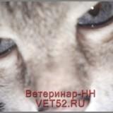 VETERINARNAY-KLINIKA-VETERINAR-NIZNII-NOVGOROD-VET52RU-133