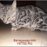 VETERINARNAY-KLINIKA-VETERINAR-NIZNII-NOVGOROD-VET52RU-137