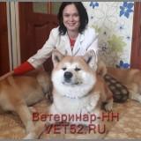 VETERINARNAY-KLINIKA-VETERINAR-NIZNII-NOVGOROD-VET52RU-142