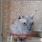 VETERINARNAY-KLINIKA-VETERINAR-NIZNII-NOVGOROD-VET52RU-150